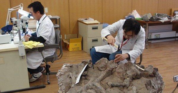 発見された化石たち