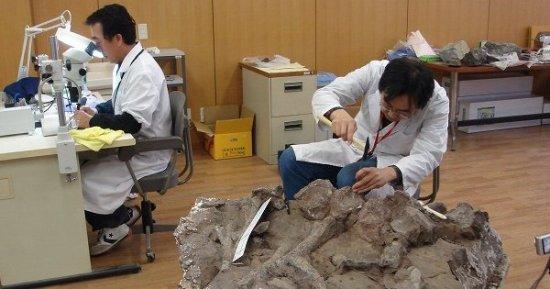 化石研究風景