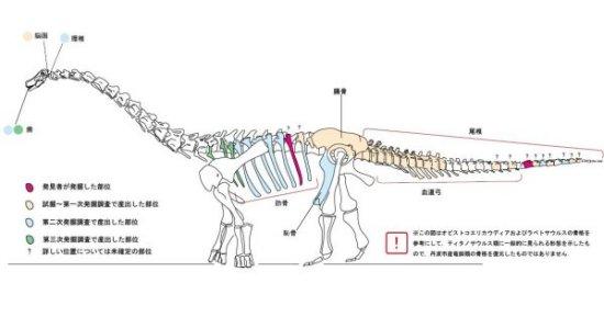 丹波竜骨格図