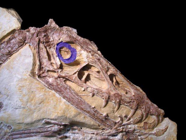 恐竜は夜目がきいた