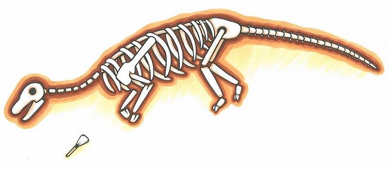 丹波地域の恐竜化石はどのようにしてみつかったのですか?