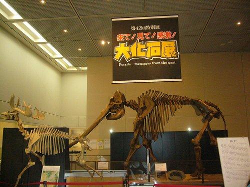 「大化石展」が大阪で開催中!!