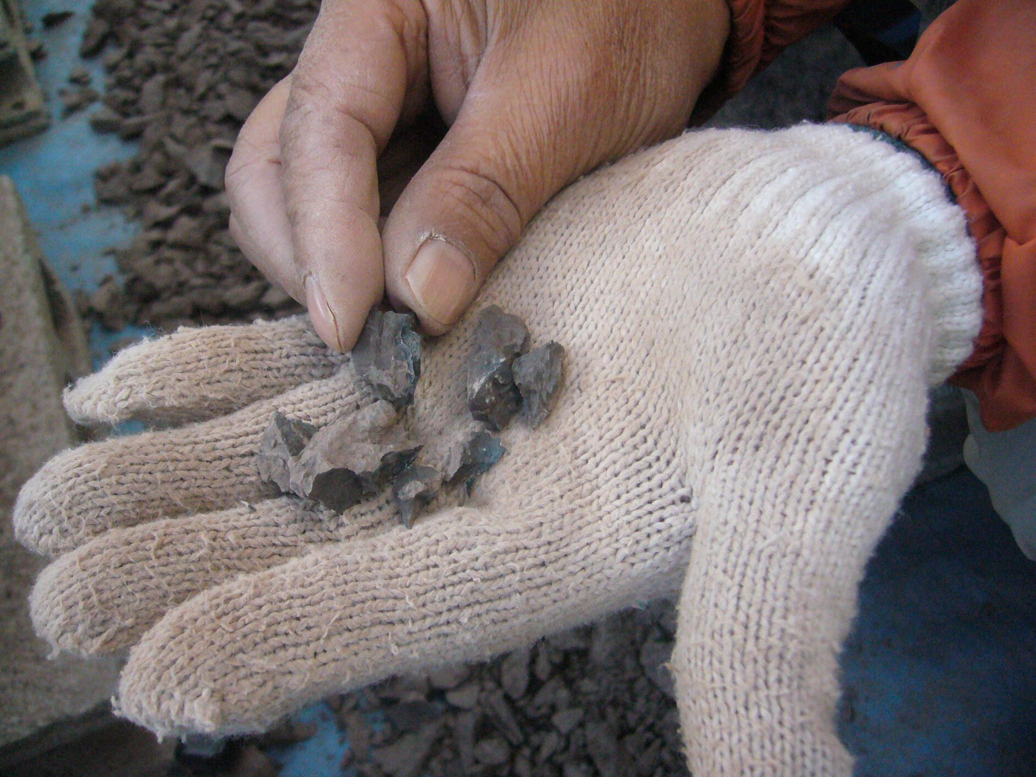 篠山層群での化石発掘体験