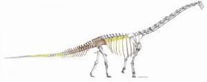 「丹波竜」 の全身骨格図