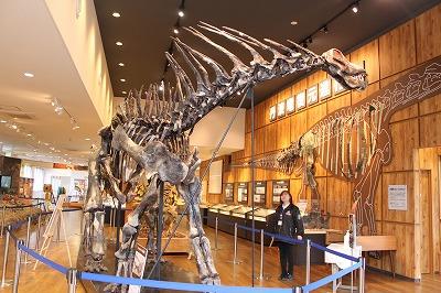 丹波竜の仲間知って ちーたんの館 竜脚類骨格展示