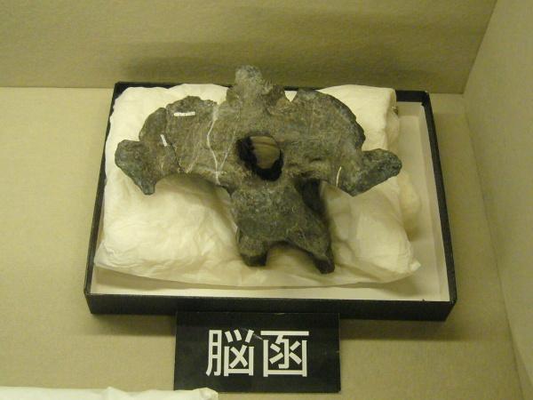 特別展「丹波竜の軌跡」@ちーたんの館 へ行ってきました。