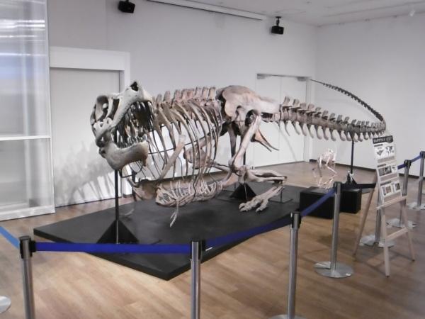 ちーたんの館で「アジアの覇者 タルボサウルスと獣脚類展」を開催