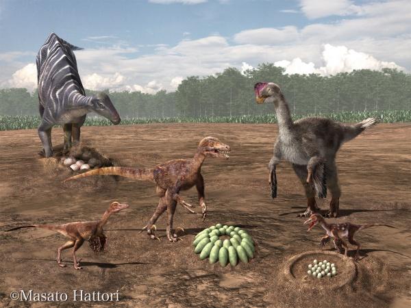 新卵属・新卵種の恐竜卵殻化石、「ニッポノウーリサス・ラモーサス」