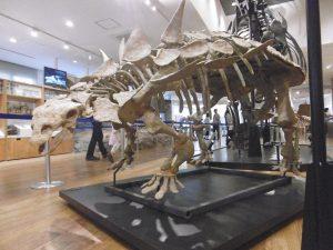 ガストニア全身骨格標本