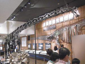 丹波竜全身骨格標本2