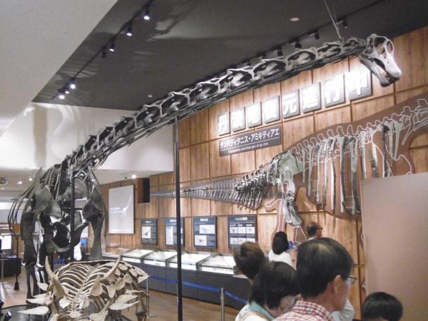 丹波竜化石工房 ちーたんの館がリニューアルオープンしました!!