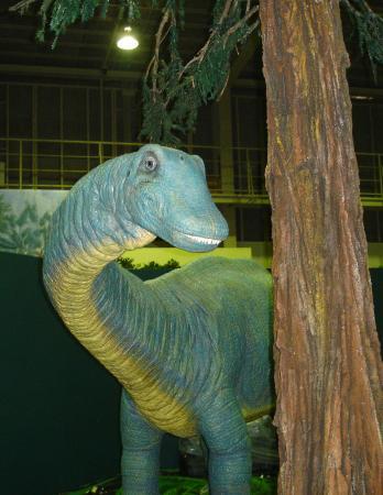 恐竜・哺乳類化石等と言えば、いま篠山層群があつい!