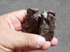 「元気村かみくげ」化石発掘体験のご案内