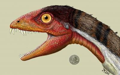 初期の恐竜と獣脚類をつなぐ新種発見