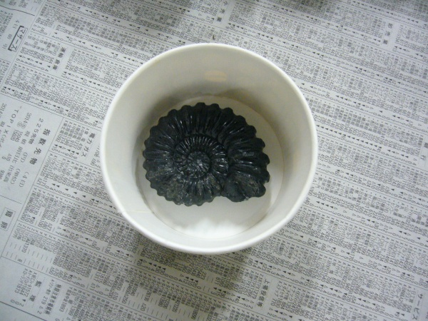 アンモナイト石鹸の型作り