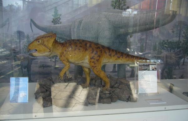 篠山市民センターでの化石展示