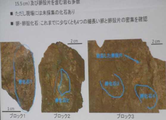 国内初、卵化石の密集地を発見!!